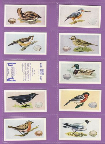 Set Of 25 - Swettenham (tea) - Birds & Their Eggs - 1958