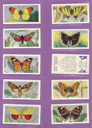 Set Of 25 - Swettenham (tea) - Butterflies & Moths - 1958