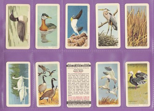 Set Of 48 - Brooke Bond & Co. Ltd. - Canada - Birds Of North America - 1962
