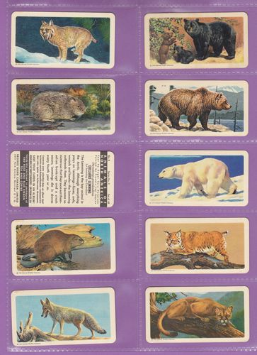 Set Of 48 - Brooke Bond & Co. Ltd. - Canada - Animals Of North America (rolland Back) - 1960
