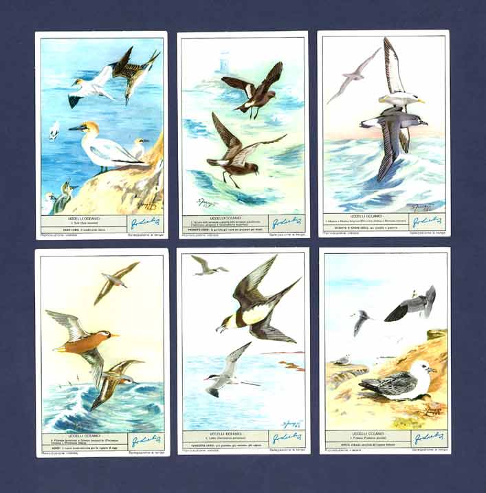 Liebig - Set Of X 6 - S 1796 / F 1793 - Ocean Birds - 1963
