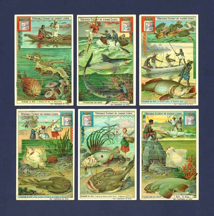 Liebig - Set Of X 6 - S  744 / F 745 - Sea Fish - 1903