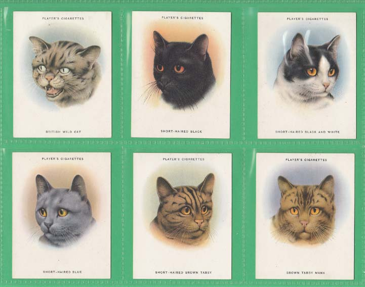 John Player & Sons - Set Of L 24 - Cats - 1936