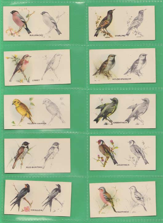 Godfrey Phillips Ltd. - Set Of 50 - Bird Painting - 1938