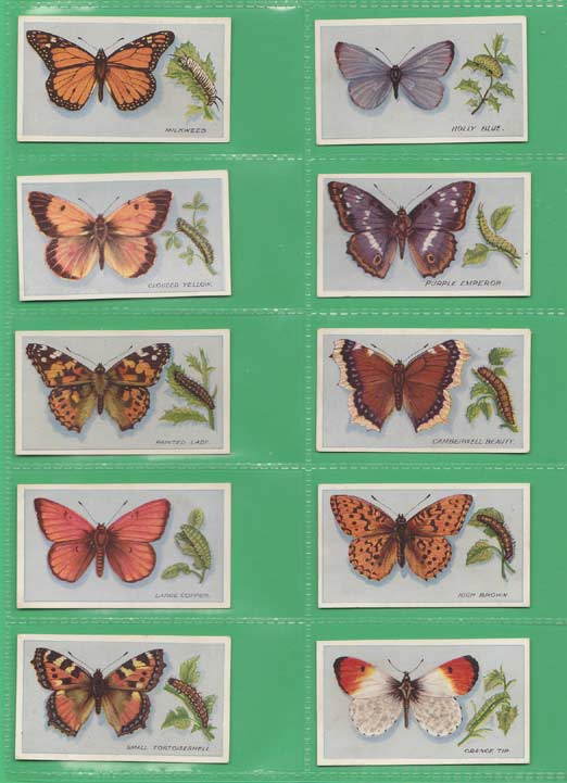 Godfrey Phillips Ltd. - Set Of 30 - British Butterflies No. 1 Issue - 1911
