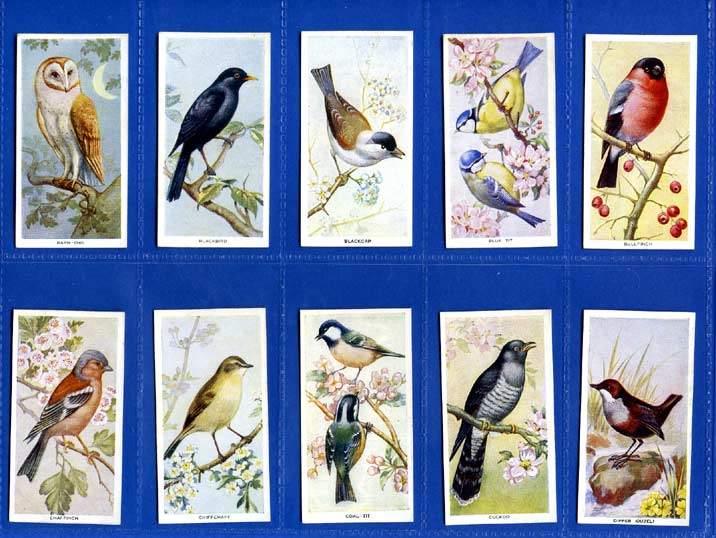 Carreras Ltd. - Set Of 50 - Birds Of The Countryside - 1939