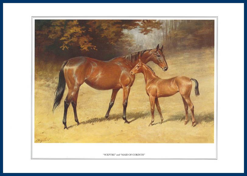 Pack Of 20 Prints - Vanity Fair Reprints - From Our Fantastic Set Of 16 Racehorses - Sceptre & Maid Of Corinth