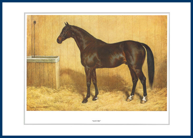 Pack Of 20 Prints - Vanity Fair Reprints - From Our Fantastic Set Of 16 Racehorses - Santry