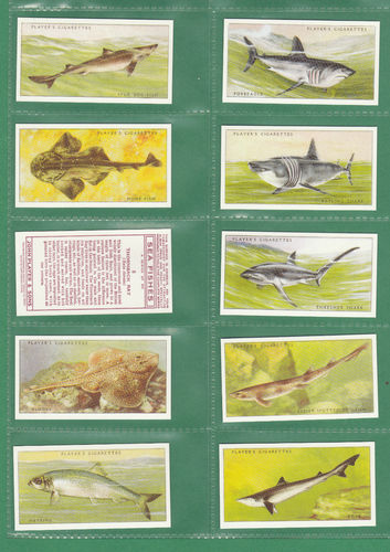 Card Collectors Society - Set Of 50 Player's ' Sea Fishes ' Cards