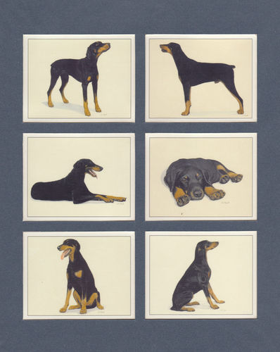 Imperial Publishing Ltd. - Set Of 6 Large Dobermann Dog Cards