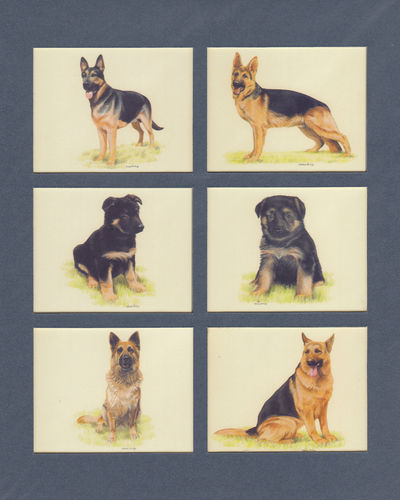 Imperial Publishing Ltd. - Set Of 6 Large German Shepherds Dog Cards