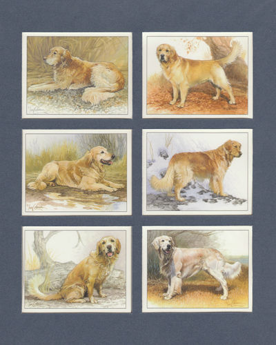 Imperial Publishing Ltd. - Set Of 6 Large Golden Retrievers Dog Cards