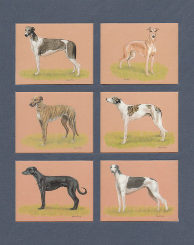Imperial Publishing Ltd. - Set Of 6 Large Greyhounds Dog Cards