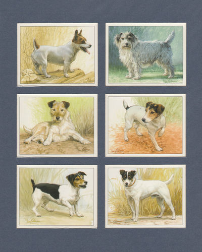 Imperial Publishing Ltd. - Set Of 6 Large Jack Russell Terriers Dog Cards