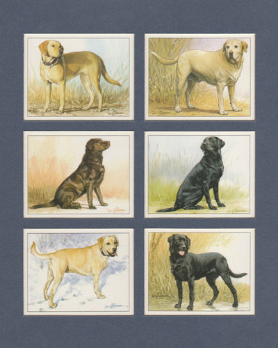Imperial Publishing Ltd. - Set Of 6 Large Labrador Retrievers Dog Cards