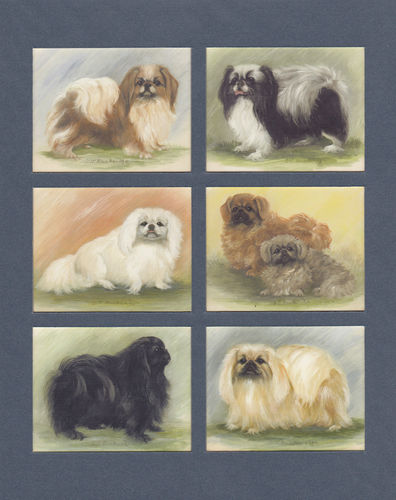 Imperial Publishing Ltd. - Set Of 6 Large Pekingese Dog Cards