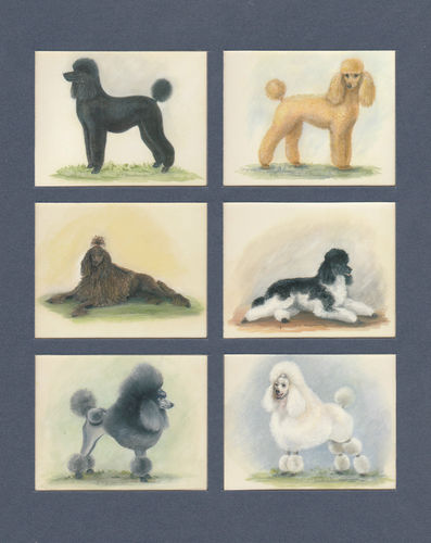 Imperial Publishing Ltd. - Set Of 6 Large Poodles Dog Cards