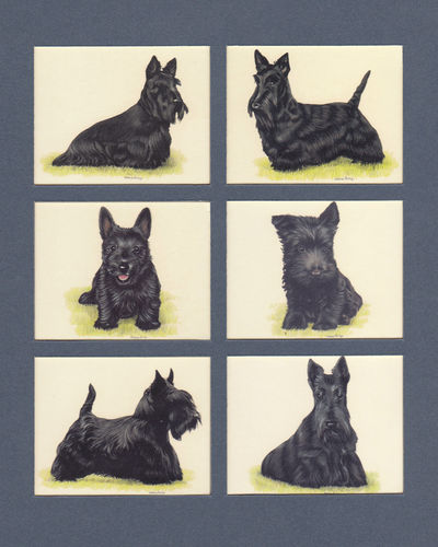 Imperial Publishing Ltd. - Set Of 6 Large Scottish Terriers Dog Cards