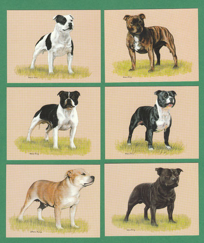 Imperial Publishing Ltd. - Set Of 6 Large Staffordshire Bull Terriers Dog Cards