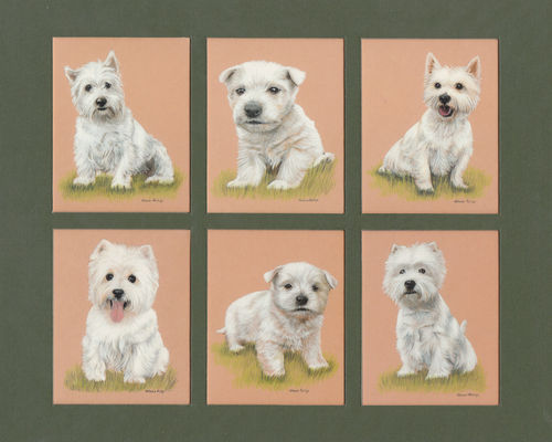 Imperial Publishing Ltd. - Set Of 6 Large West Highland White Terriers Dog Cards