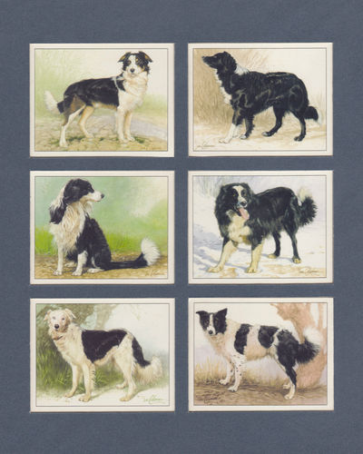 Imperial Publishing Ltd. - Set Of 6 Large Border Collies Dog Cards