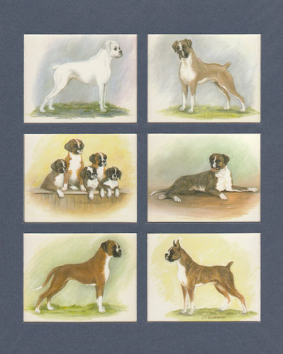 Imperial Publishing Ltd. - Set Of 6 Large Boxers Dog Cards