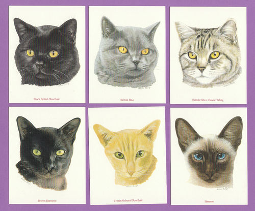 Imperial Publishing Ltd. - Set Of 6 Large Breeds Of Cats Cards