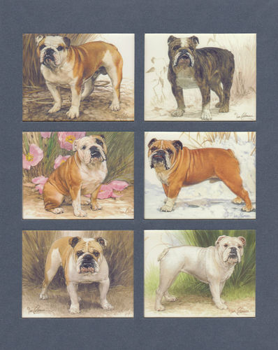 Imperial Publishing Ltd. - Set Of 6 Large Bulldogs Dog Cards
