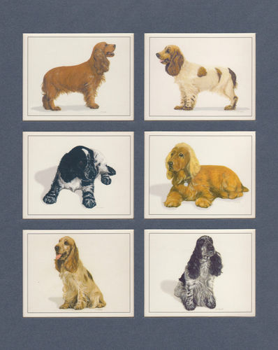 Imperial Publishing Ltd. - Set Of 6 Large Cocker Spaniels Dog Cards