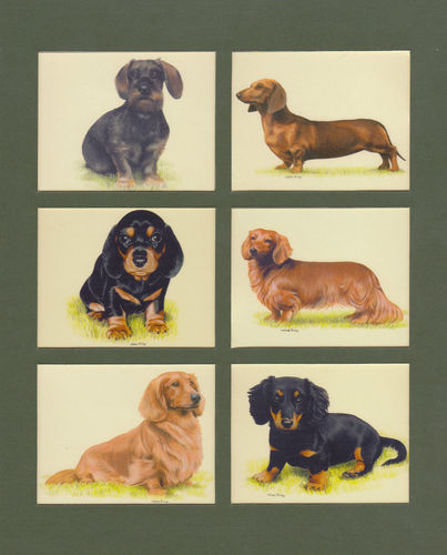 Imperial Publishing Ltd. - Set Of 6 Large Dachshunds Dog Cards