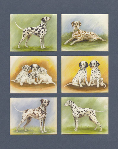 Imperial Publishing Ltd. - Set Of 6 Large Dalmations Dog Cards