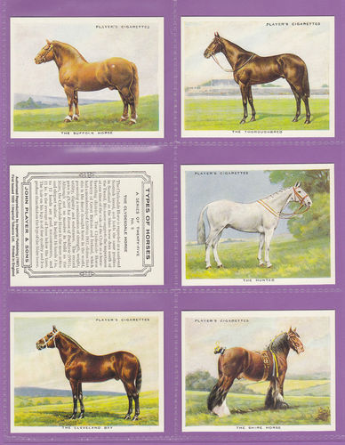 Imperial Publishing Ltd - Set Of 25 Large Player's ' Types Of Horses ' Cards