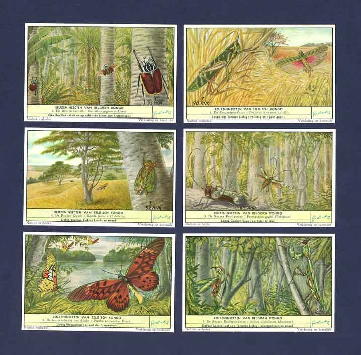 Liebig - Set Of X 6 - S 1644 / F 1644 - Large Insects Of The Belgian Congo - 1956