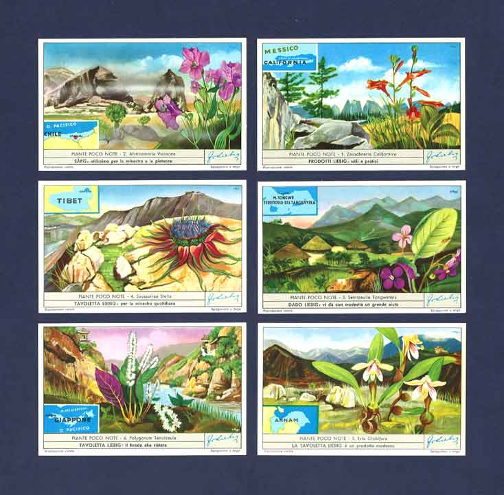 Liebig - Set Of X 6 - S 1672 / F 1671 - Unfamiliar Plants  - 1957