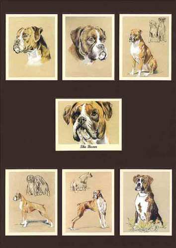 Perikim Dogs - Set Of 7 The Boxer Cards - 2001