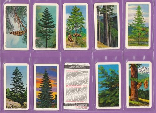 Set Of 48 - Brooke Bond & Co. Ltd. - Canada - Trees Of North America - 1968