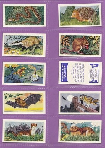 Set Of 25 - Swettenham (tea) - Animals Of The Countryside - 1959