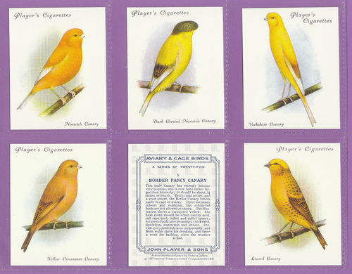Victoria Gallery - Set Of 25 Large Players ' Aviary & Cage Birds ' Cards