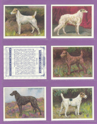 Victoria Gallery - Set Of 25 Large Wills ' Dogs ' Cards