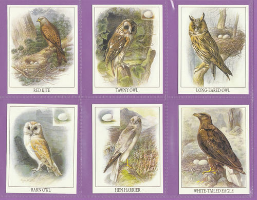 Victoria Gallery - Set Of 6 Large British Birds Of Prey Cards - 1996