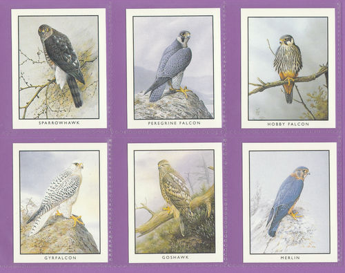 Victoria Gallery - Set Of 6 Large British Birds Of Prey Cards 1994